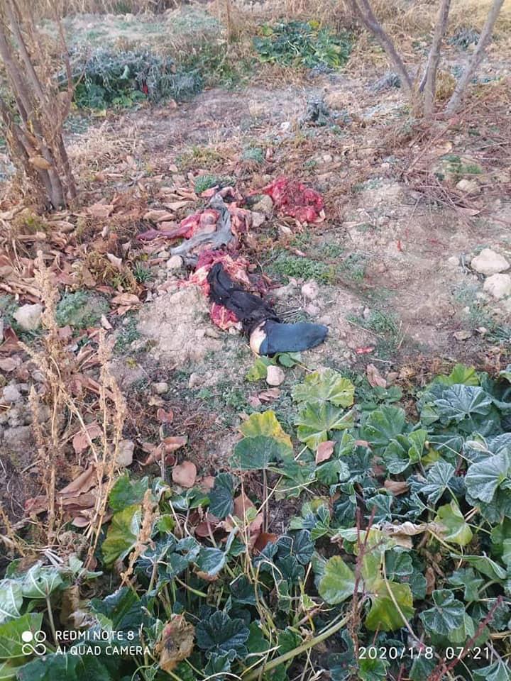 اجساد هواپیما اوکراینی