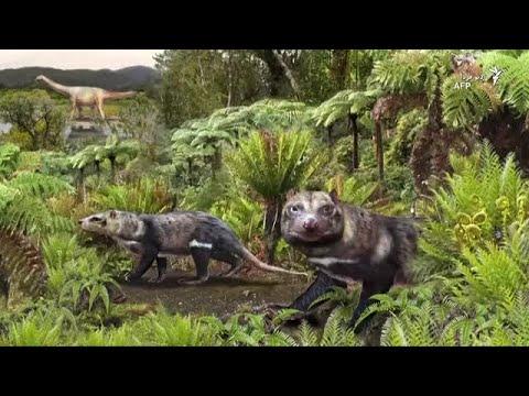 بقایای پستاندار ۷۴ میلیون ساله در شیلی